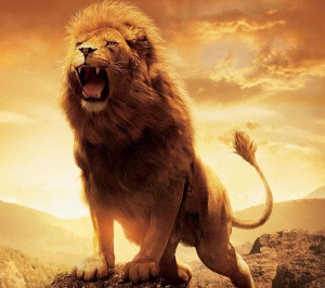 Freedownloadlionwallpaper_2
